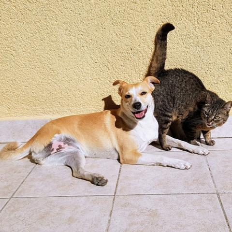 Pohlavní dospělost psů a koček